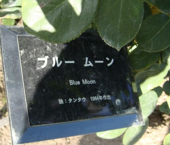ブルームーン (2).JPG